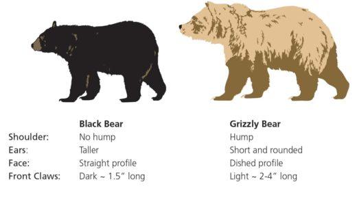 Black bear or Grizzly Bear Spray